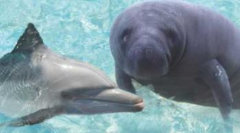 Dolphins and Manatees